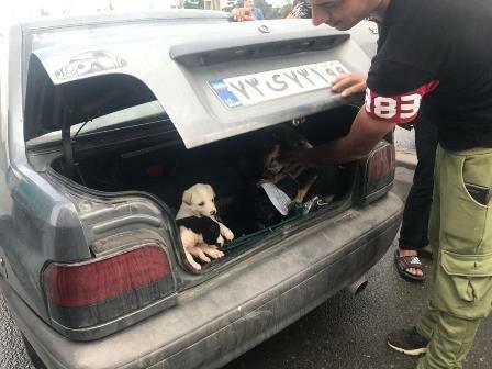 چه مجازاتی در انتظار حیوان آزار ها است؟