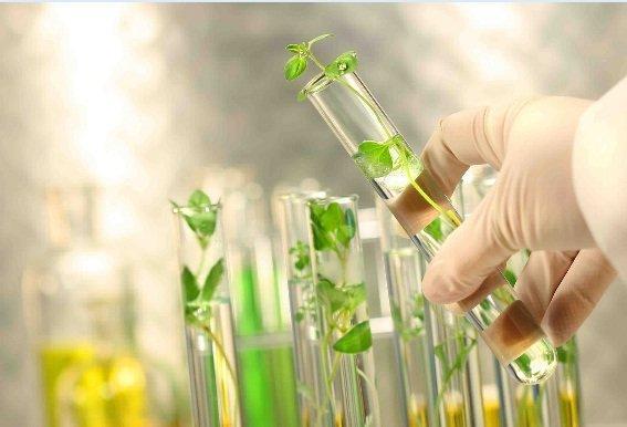 بازار های جهانی مقصد محصولات زیستی با برند ایرانی می شوند