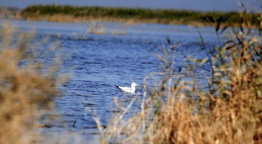 باران تالاب های خوزستان را احیا کرد ، افزایش جمعیت پرندگان مهاجر در خوزستان
