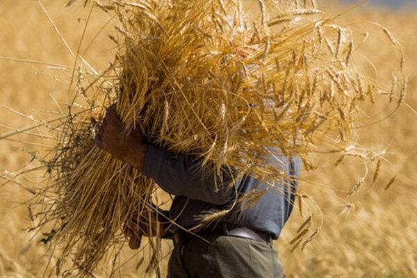مشهد عظیم ترین تولیدکننده محصولات کشاورزی استان