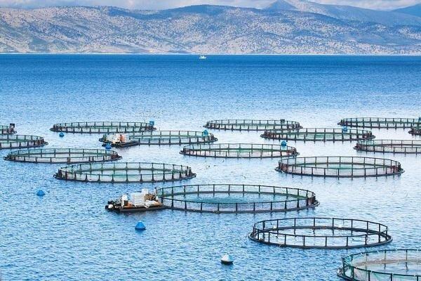 تولید بومی تجهیزات قفس پرورش ماهی توسط دانش بنیان ها