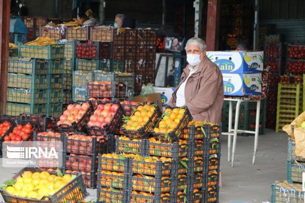 خبرنگاران میوه تنظیم بازار در استان قزوین بدون هیچ مسئله ای توزیع شد